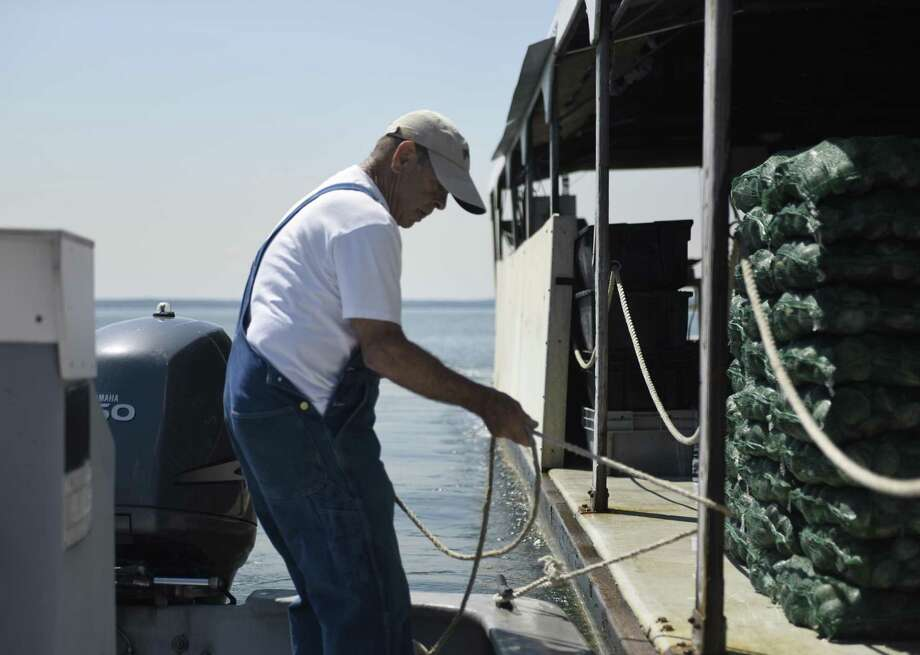Photos from Atlantic Clam Farms clamming boat in the waters of the Long Island Sound off the coast of Greenwich, Conn. in the summer of 2016. Ed Stilwagen is the owner of Atlantic Clam Farms, based in Port Chester, N.Y., and is hoping to expand the company to include commercial kelp harvesting. Photo: Tyler Sizemore / Hearst Connecticut Media / Greenwich Time