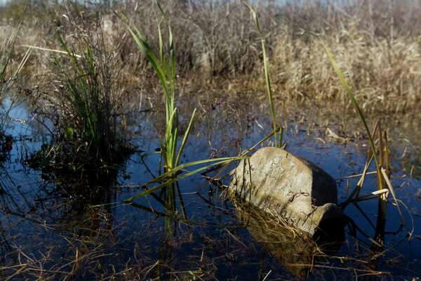 A headstone is seen partially submerged by water in Sweet Rest Cemetery, Saturday, Jan. 13, 2018, in the historic Tamina community. The 12-acre cemetery is the resting place for approximately 261 members of the founding Montgomery County community founded by freed slaves near The Woodlands.