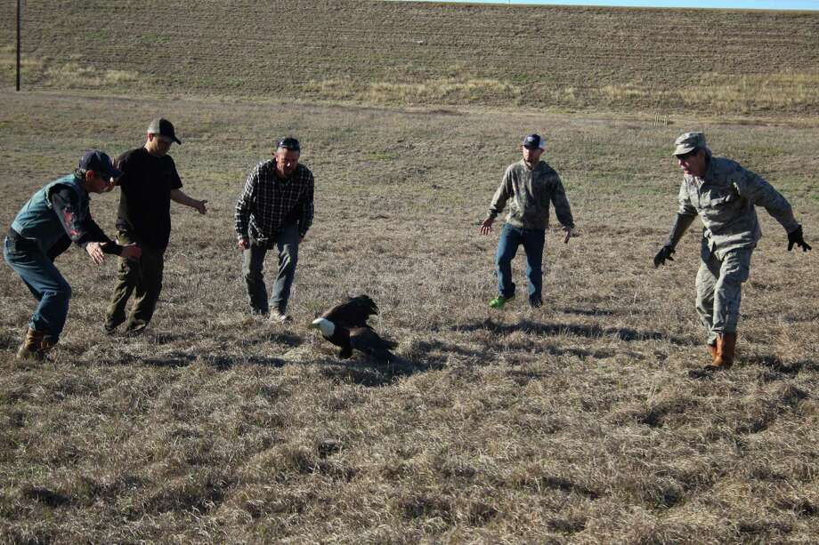 Bill Heyde (right) recruited a group of onlookers into helping him wrangle Hunter, a bald eagle, after the bird showed no interest in flying. Photo: Jacob McAdams