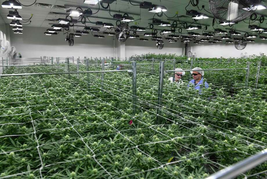 Green Leaf Medical CEO, Philip Goldberg, second from right, and his brother and general council, Kevin Goldberg, right, inspect the marijuana plants as they walk through one of the flower rooms at Green Leaf Medical in Frederick, Maryland. Photo: Washington Post Photo By Ricky Carioti / The Washington Post