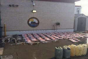 More than 2,000 pounds of fish, shark and eels were seized froma lancha boat in American waters.