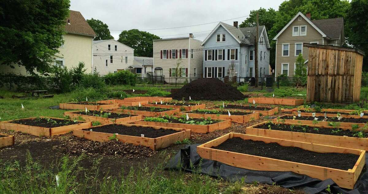 Seedlings for a harvest in the New Haven Farms incubator program begin to flourish in raised beds in early spring.