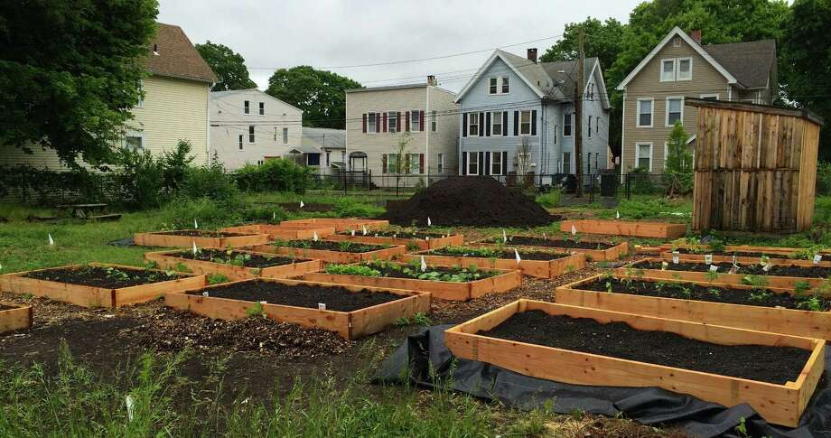 Seedlings for a harvest in the New Haven Farms incubator program begin to flourish in raised beds in early spring. Photo: Credit: New Haven Farms