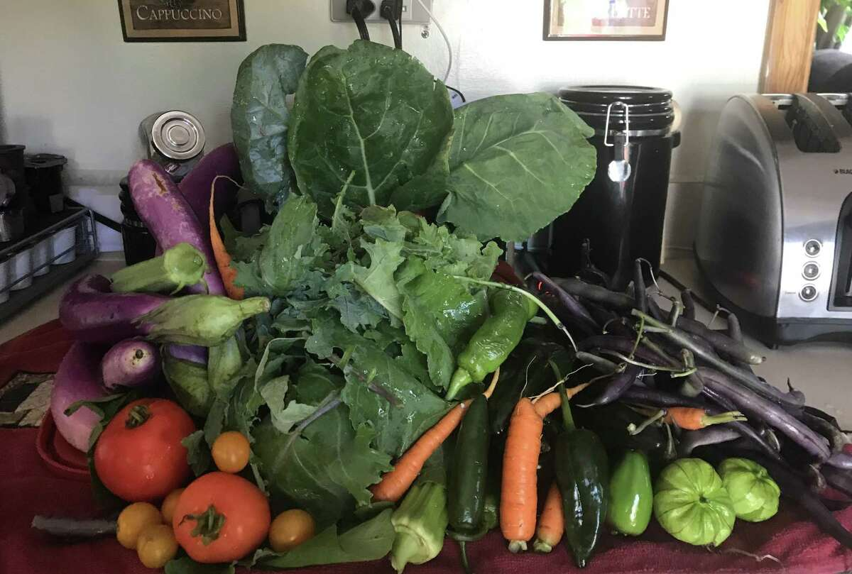 A photo showing a harvest from a New Haven Farms garden.