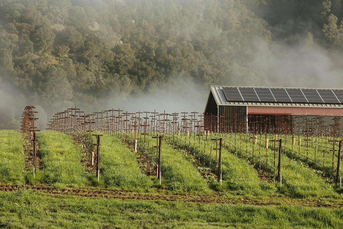 Silver Oak's Alexander Valley vineyard in Healdsburg, Calif. Saturday, Jan. 13, 2018.