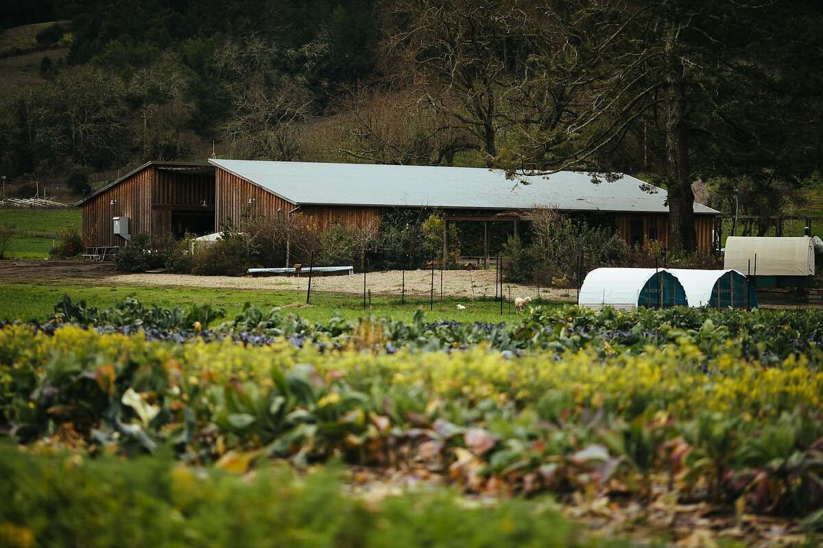 Front Porch Farm in Healdsburg, a supplier for Shed, one of the Sonoma County restaurants recognized by the Slow Food Snail of Approval.