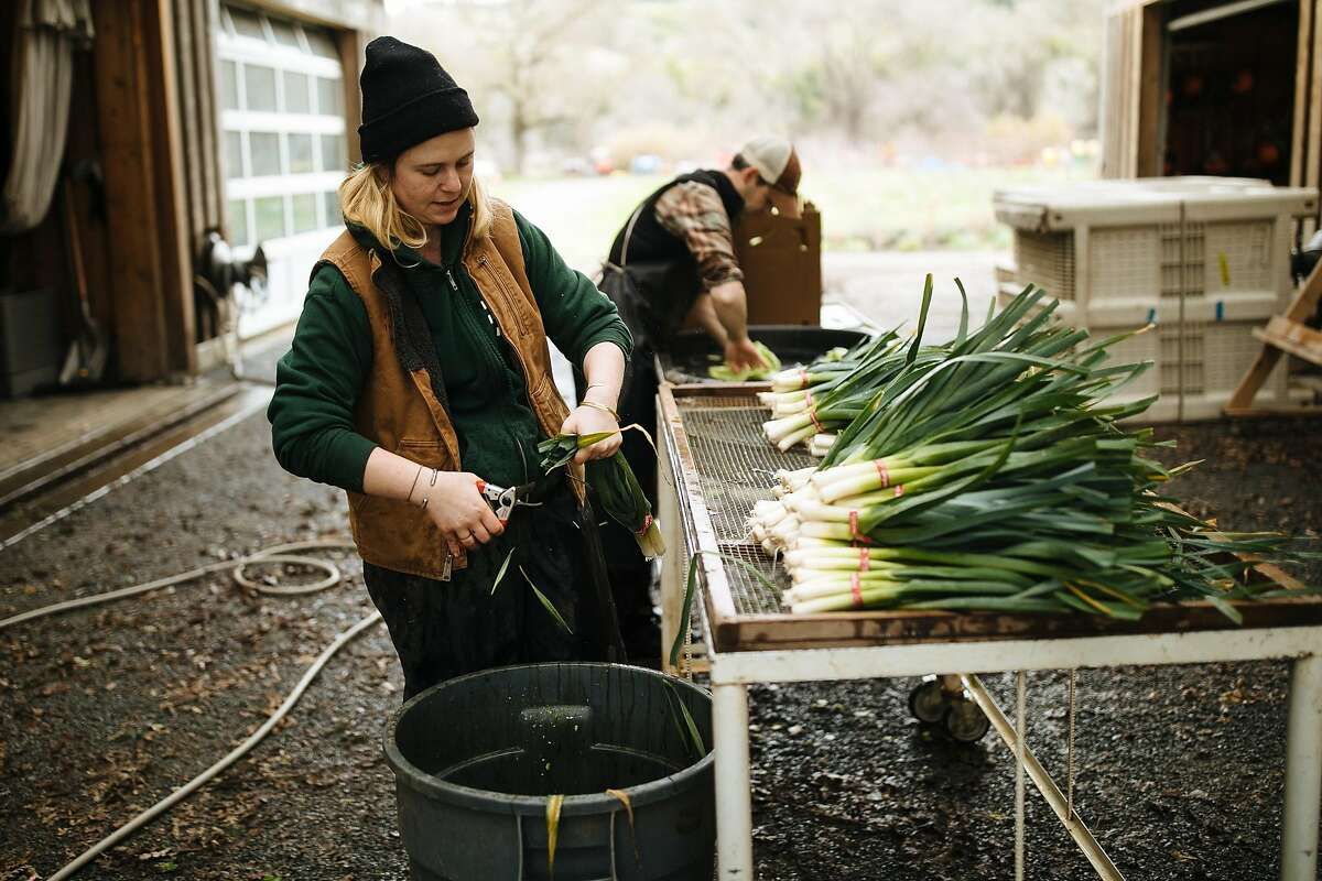 Eliza Milio prepares freshly picked leeks at Front Porch Farm in Healdsburg, a supplier for Shed, one of the Sonoma County restaurants recognized by the Slow Food Snail of Approval.