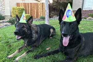 The Vacaville Police Department shares photos of police dogs Russell and Roscoe.