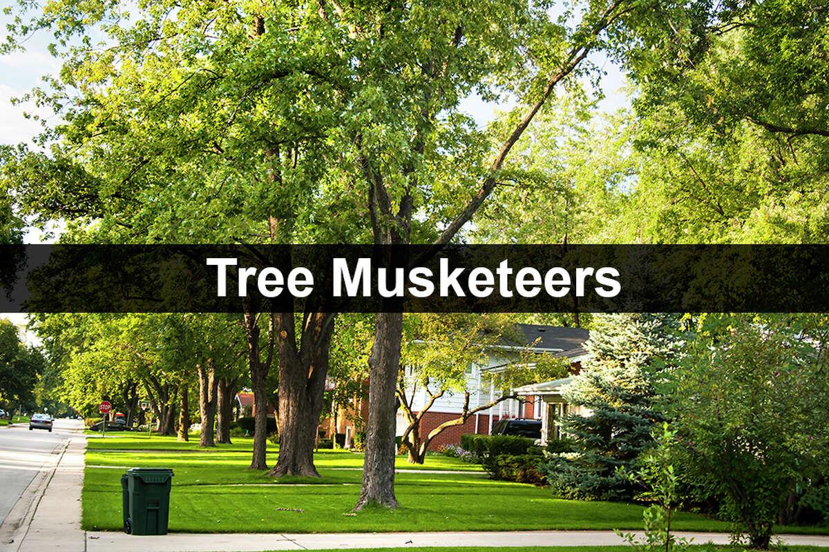 Tree Musketeers LLC tree service 14323 Larkstone Dr., San Antonio