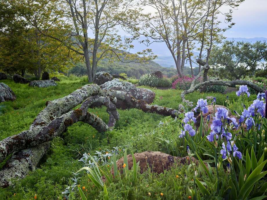 In Molly Chappellet's vineyard garden in St. Helena, the limbs of a fallen black oak are arranged as sculpture in a garden that embraces both natural and edited elements. Photo: Marion Brenner, Marion Brenner / The Monacelli Press