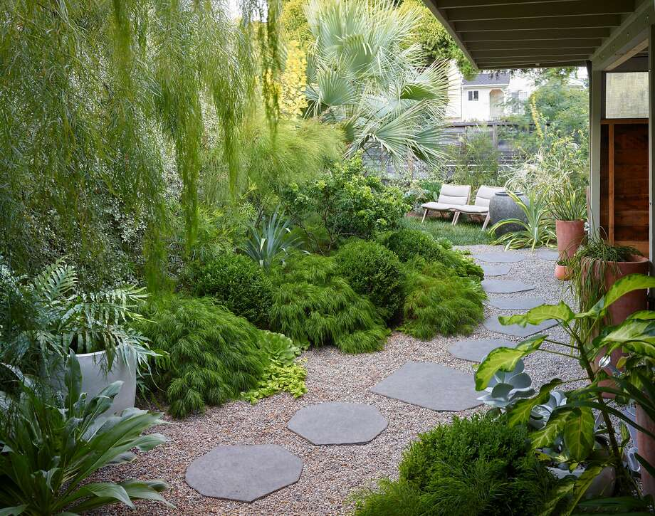 Flowing Acacia 'Cousin Itt' lines a walkway in Flora Grubb's Berkeley home. Grubb owns Flora Grubb Gardens in S.F. Photo: Marion Brenner / The Monacelli Press