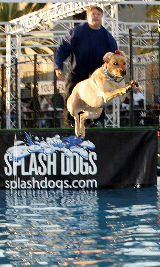The Splash Dog contest will be popular entertainment at the International Sportsmen's Exposition. Photo: International Sportsmen's Expo