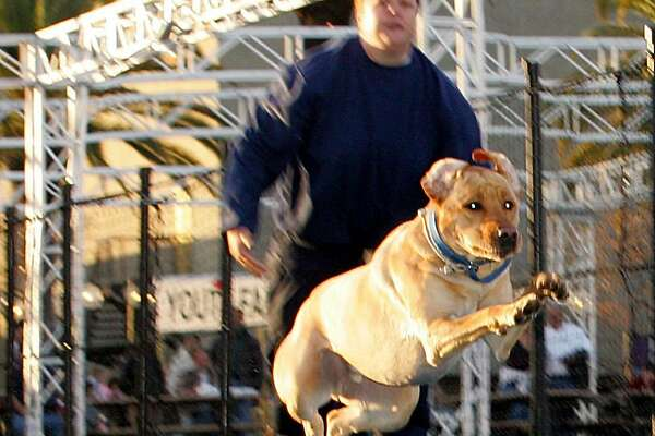The Splash Dog contest will be popular entertainment at the International Sportsmen's Exposition PERMISSION: Tony Reed, owner, Splash Dogs  PHOTO CREDIT: International Sportsmen's Expositions