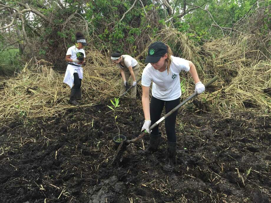 Quinnipiac University students (from left) Deisha Quiñones, Amada Pullano and Alexis Ferrara planting mangroves in Cataño, Puerto Rico where Hurricane Maria devastated the habitat in September. Photo: Margarita Diaz / Contributed Photo