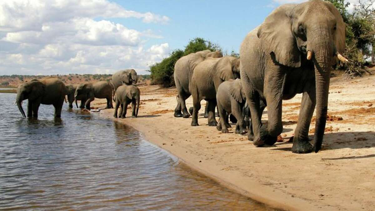 Wildlife viewing is a major draw for visitors to Botswana.