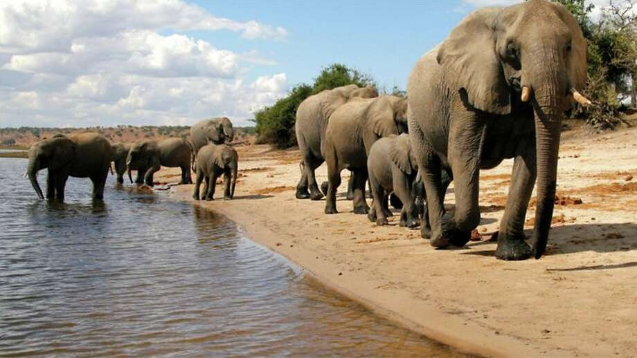 Wildlife viewing is a major draw for visitors to Botswana.  Photo: Botswana Tourism Organisation