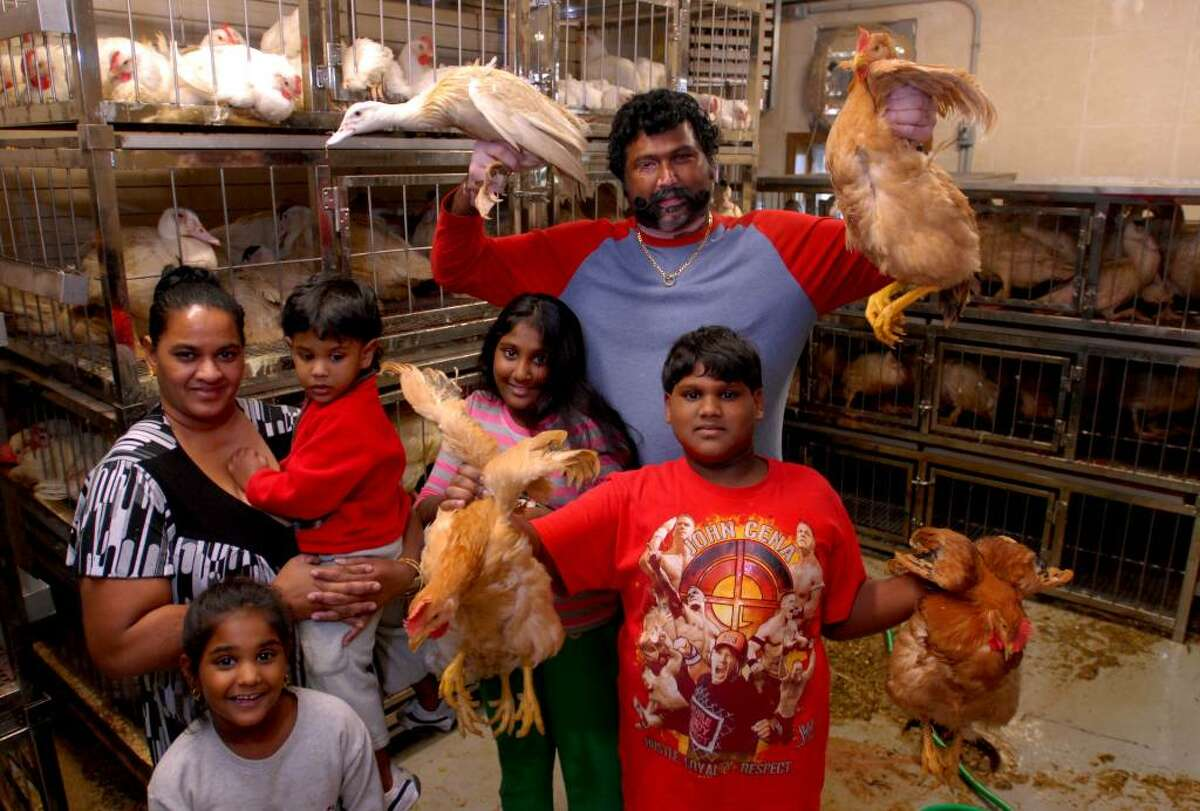 Terry Jagiah, back row, owner of the new Broadway Live Poultry Market, holds chickens and ducks in the shop on Broadway in Schenectady. The shop is operated by Jagiah and his wife, Geeta. (Luanne M. Ferris / Times Union)
