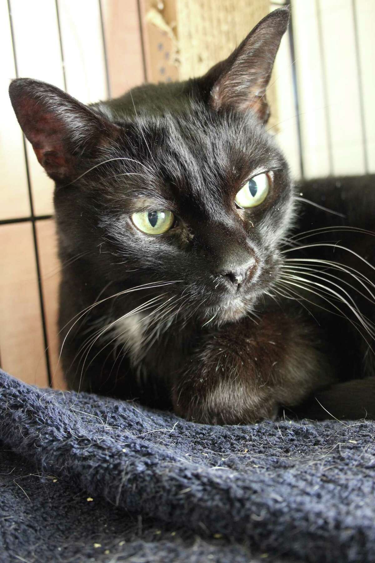 Keady, a new arrival, is a young senior ready to find her new and last
