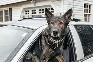 Connecticut State Police announced Jan. 16, 2018, that State Police K9 Brutus will receive a bullet- and stab-protective vest from Vested Interest in K9s, Inc. — a non-profit organization based in East Taunton, Massachusetts.