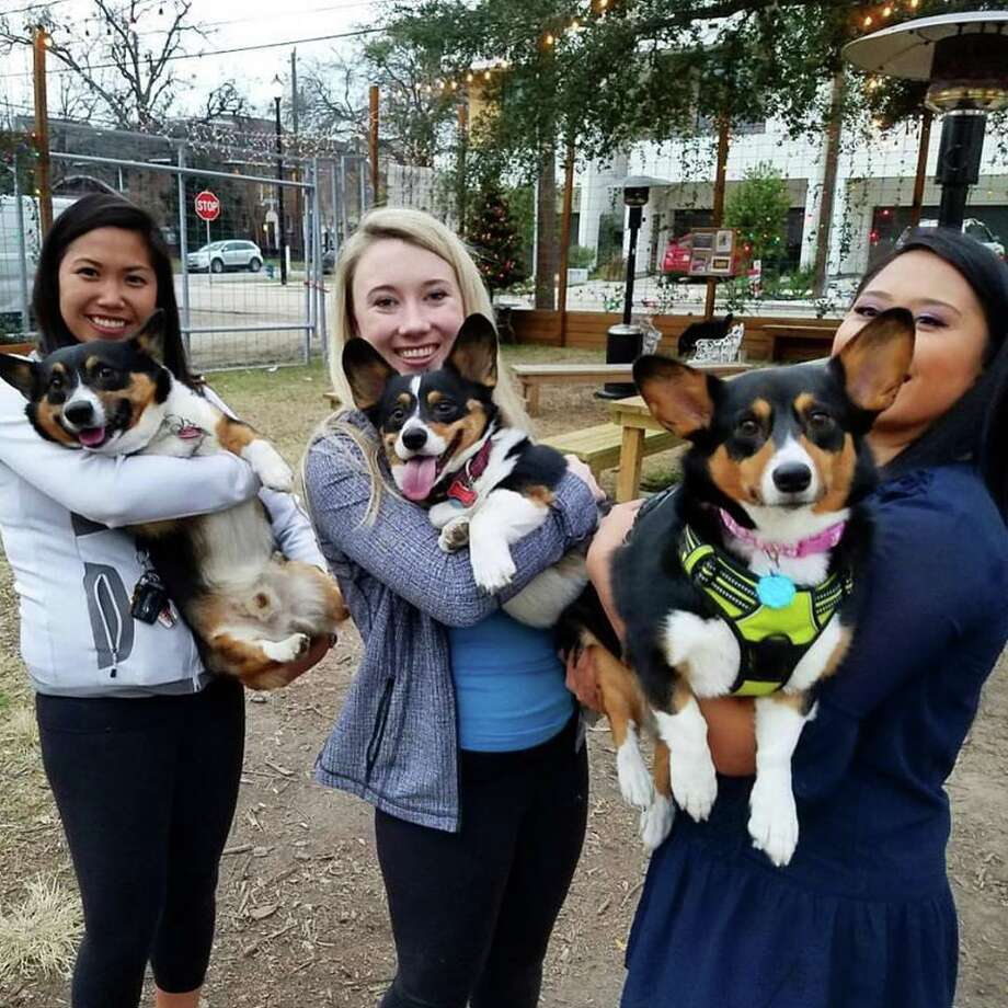 The BarkHappy Houston New Year Pawty features pet-friendly activities at Under The Radar Brewery, benefiting Adore Houston, Saturday. Photo: Liz Bacon