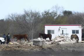 Animal Care Services personnel look over a property in the 12500 block of Old O'Connor Road where horses and a donkey were seized Wednesday after a two-week investigation.