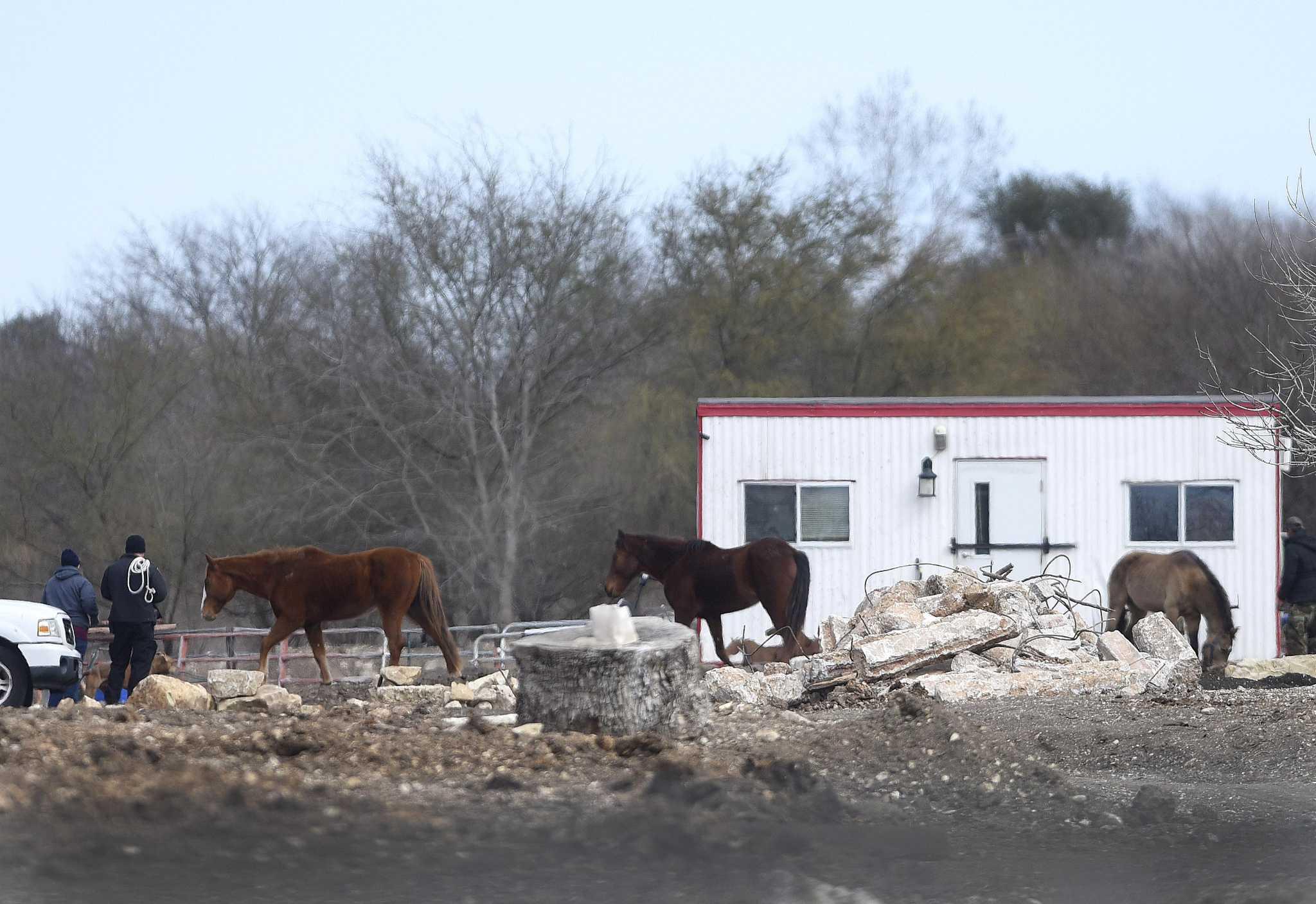 8 horses, donkey on Northeast Side being taken into custody