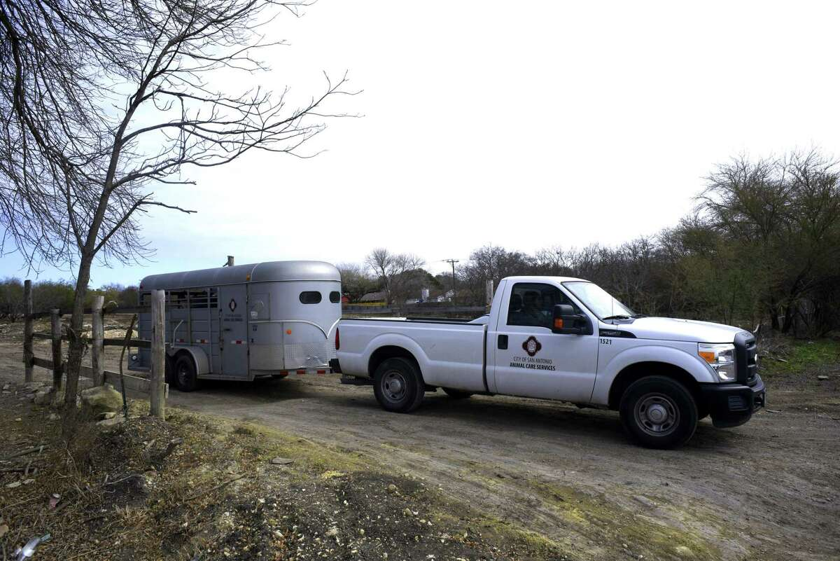 An Animal Care Services vehicle leaves a property in the 12500 block of Old O'Connor Road with a donkey and a horse on board Wednesday. The animals were seized because of suspected animal cruelty.