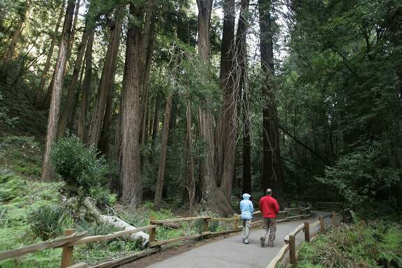 A couple walk along a pathway beneath giant redwoods at the Muir Woods National Monument in Marin County, Calif., Monday, March 31, 2008. Muir Woods, just a dozen miles north of San Francisco, gets a million visitors a year and the sounds of Mandarin, French, Spanish or a score of other languages are often heard in the park at any time. Mostly they seem to be saying the same thing: These trees are big. (AP Photo/Eric Risberg)