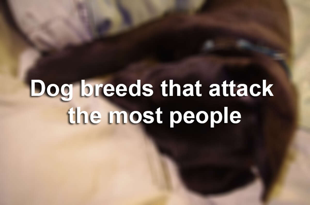 Which dog breeds are most often implicated in attack incidents? PetBreeds released a ranked list of the 35 most-cited breeds involved in dog-related attacks and deaths, based on this report. We give you the top 20.