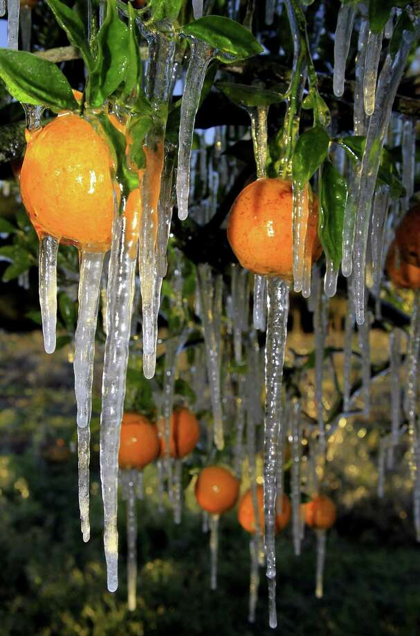 Icicles cling to oranges. Photo: Courtesy Chris O'Meara /AP