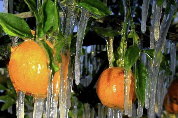 Icicles cling to oranges.