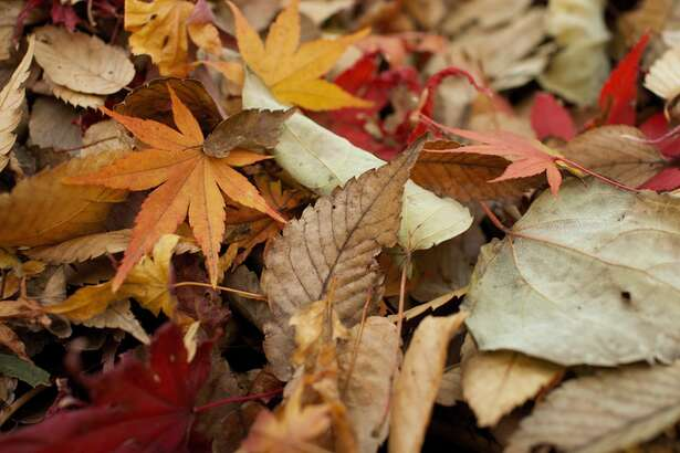Clean Up Now is the time for a final clearing of spent plants and fallen rotten fruit, as well as a cleaning out of pots and containers. Healthy plant material can be composted, trash thrown away, gutters cleaned, and re-usable materials packed away.