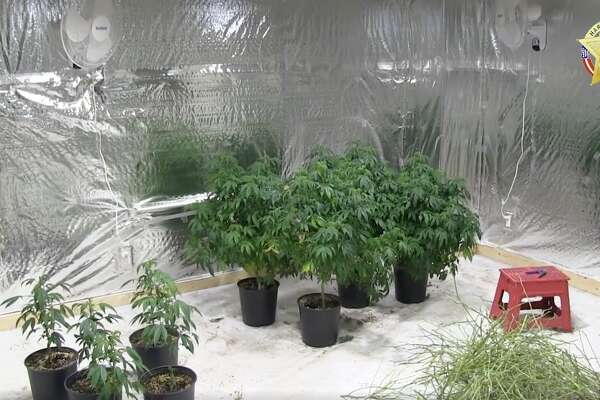 Deputies seized $300,000 worth of marijuana plants from a Cypress home Thursday night.