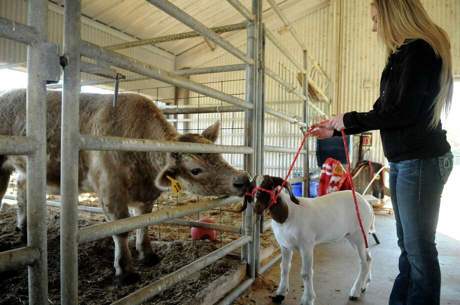 Tomball ISD will kick off its 42nd FFA Project Show Jan. 25 and will showcase rabbits, turkeys and pigs. Photo: Jerry Baker, Freelance