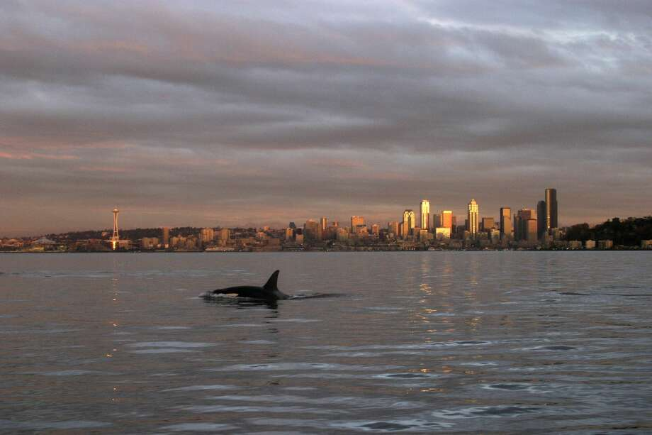 Seattle:Salary it takes to be rich: $148,916Median household income: $74,458 Photo: Joel Rogers/Getty Images