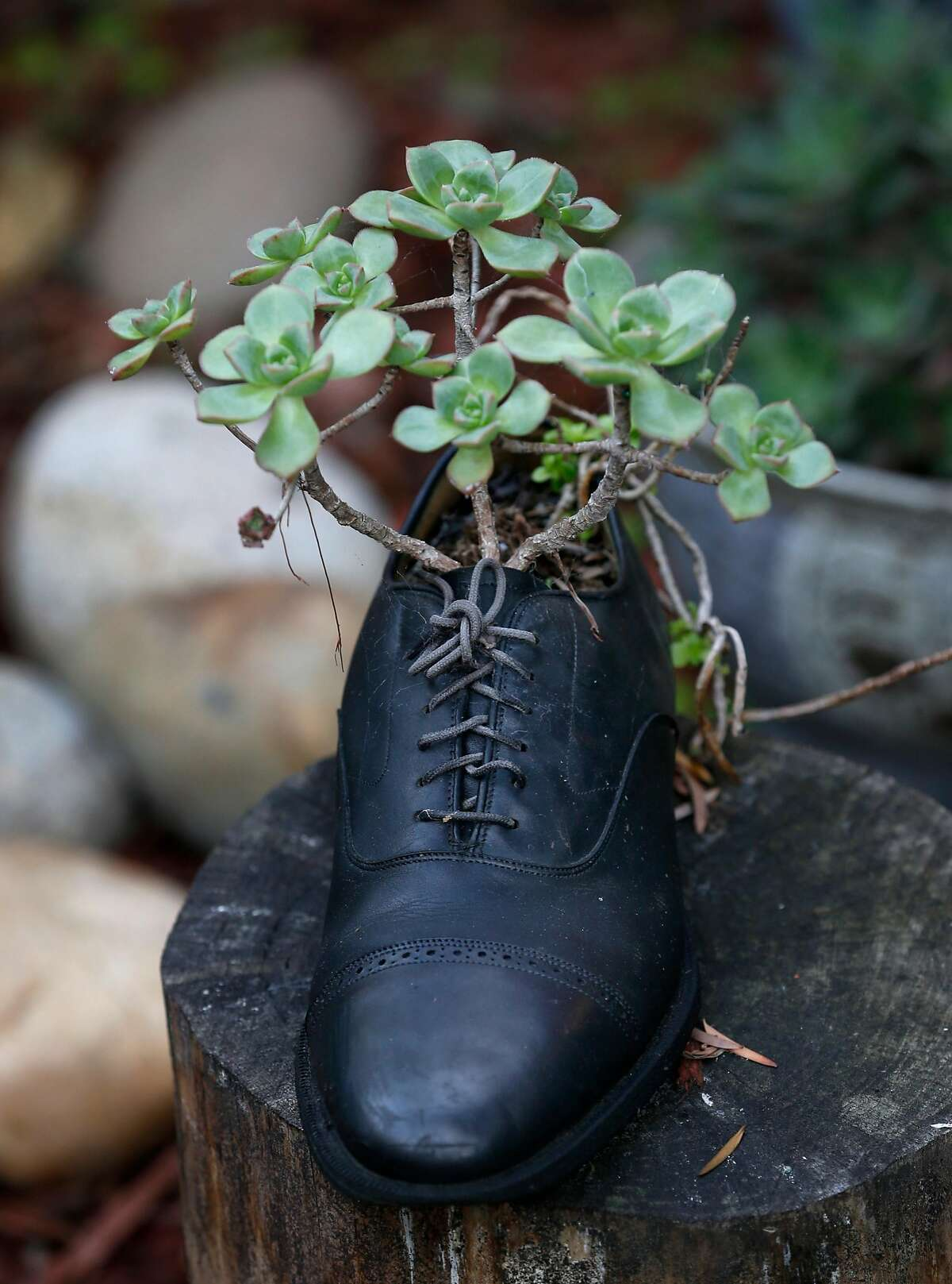 Shoes are used by Ren� Ya�ez as planters throughout the garden he maintains at the SOMArts Cultural Center in San Francisco, Calif. on Saturday, Dec. 2, 2017.