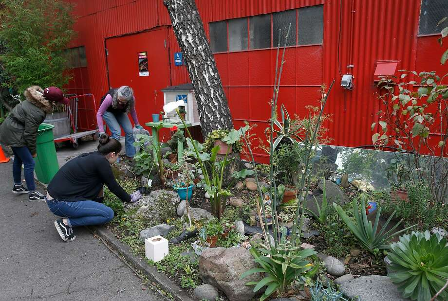Volunteers chip in to help René Yañez tend to his garden at the SOMArts Cultural Center in San Francisco. Photo: Paul Chinn, The Chronicle