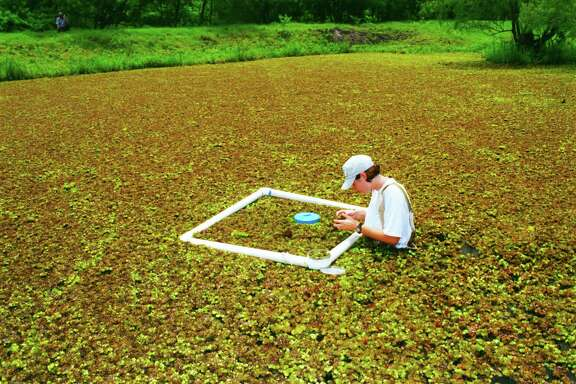 Texas' efforts to control invasive aquatic species such as giant salvinia smothering this Liberty County pond got a helping hand from this winter's freezing temperatures which can prove fatal to some exotic vegetation and fish threatening inland waters.