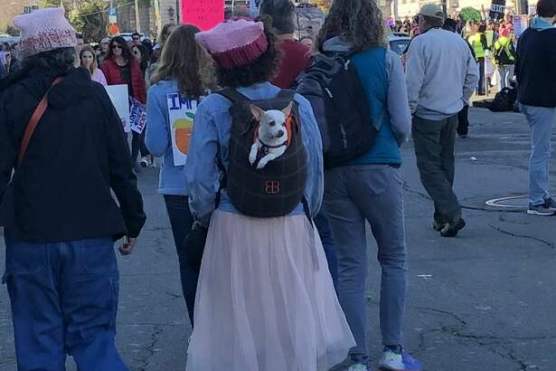 Socially conscious dogs flocked to the San Francisco Women's March on Saturday.
