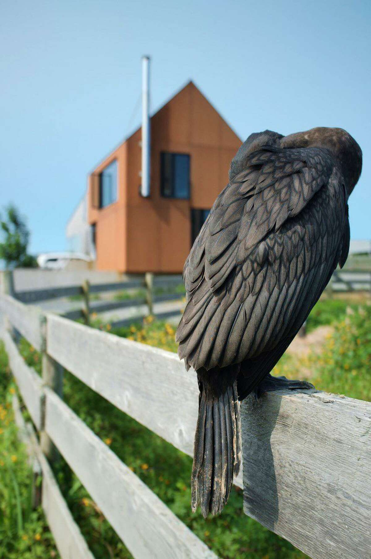 Right, Shobac Bird by Audrey Bloom, of New Canaan, is on display through Feb. 18 as part of the 38th Annual Photography Show at The Carriage Barn Arts Center in Waveny Park.