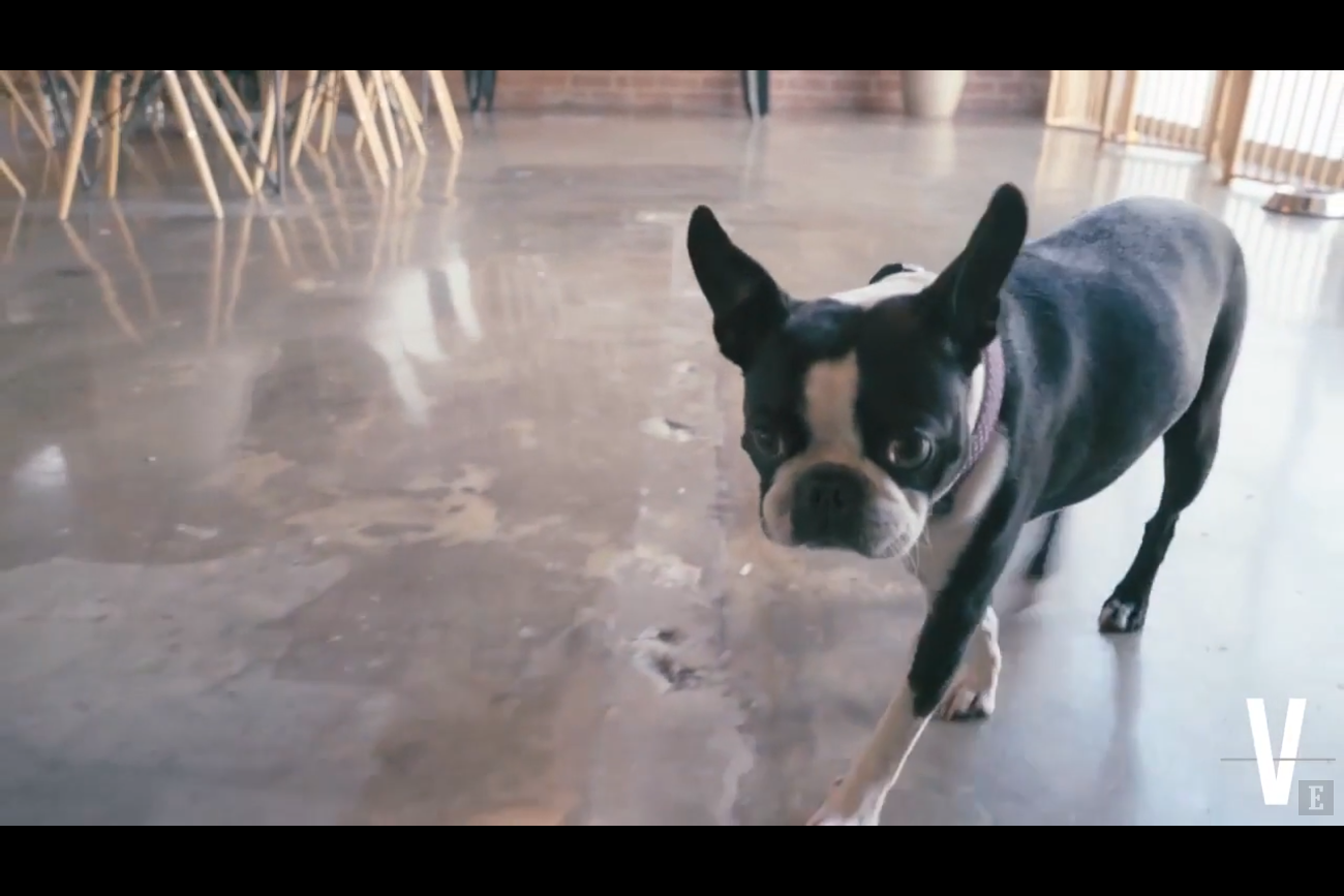 Pets Surround Sound Speakers And Ping Pong Tables Take A Virtual Tour Of This Modern Office
