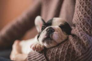 Canine flu cannot spread to other animals or to people, but it is contagious between dogs. It most often spreads in areas where large numbers of dogs are kept together, like boarding facilities or kennels.