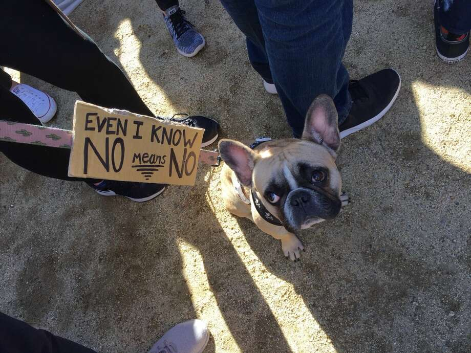 Duke the dog attends the Women's March. Photo: Joe Hanson