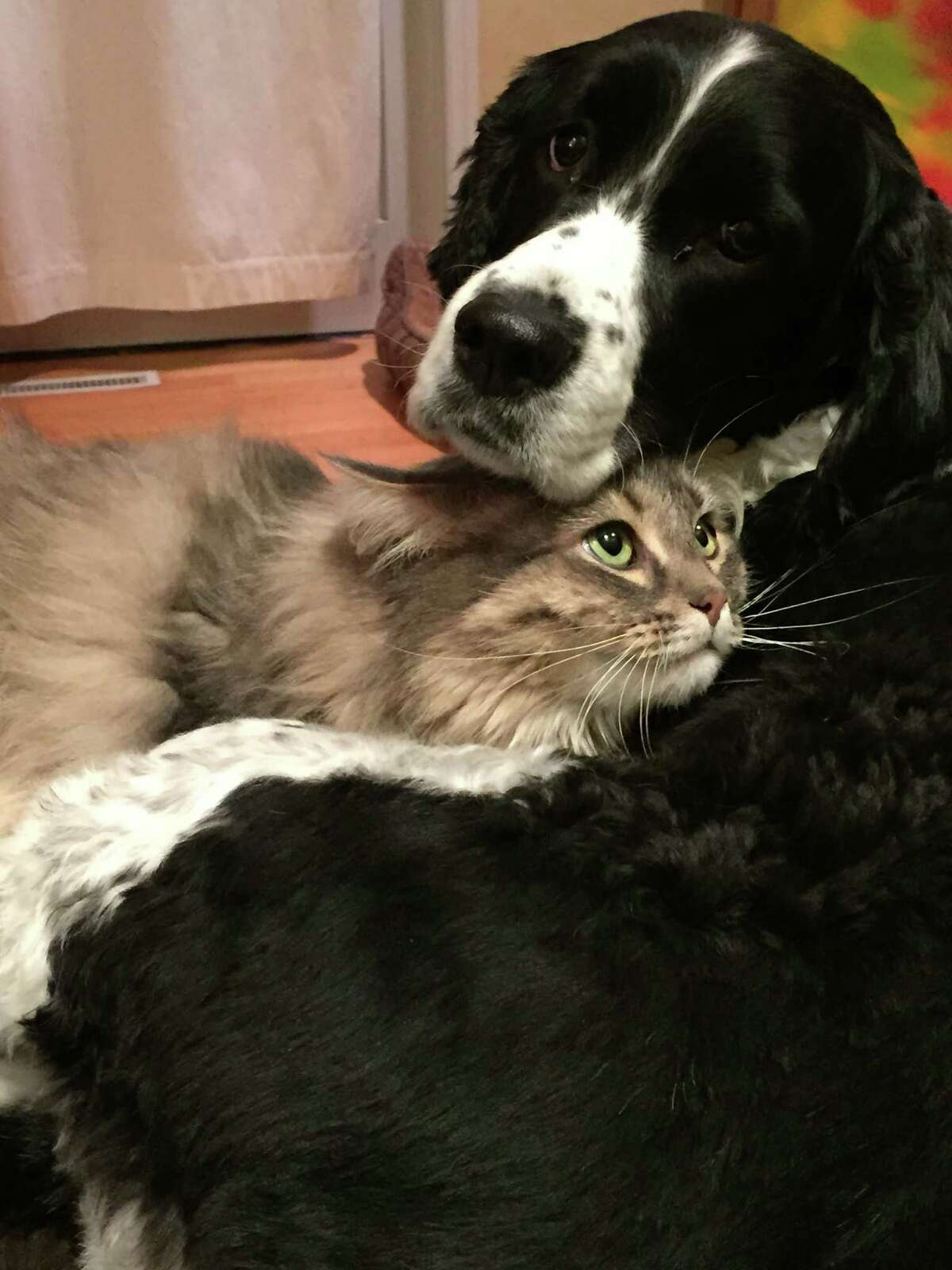 Click through the slideshow for a few dogs (and other pets) who were featured in an Upstate magazine photo contest earlier this year.Honorable Mention: Riley, the dog, and Aria snuggle together in Jennifer Dentinger's Latham home. (Provided)