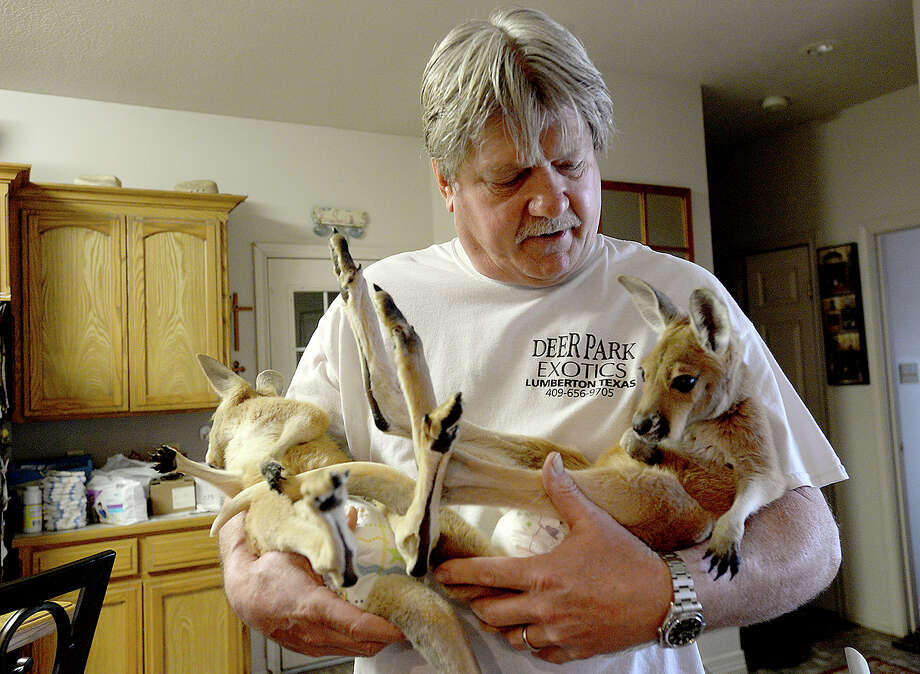 Perry Viator carries Hannah and Lucy, the youngest of his red kangaroos, as he bets ready for their afternoon feeding at his home in Lumberton Saturday. Viator has been raising kangaroos at his home for 26 years and is licensed by the USDA to sell them.  Photo taken Saturday, January 20, 2018 Kim Brent/The Enterprise Photo: Kim Brent / BEN