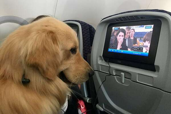 Complaints about animals flying on airliners have increased 500 percent over five years.