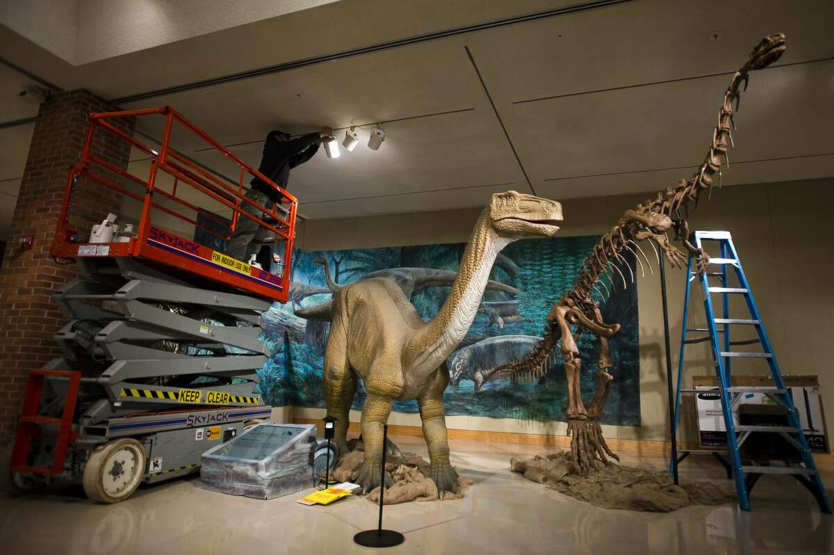 Staff put the finishing touches on a dinosaur display at the Midland Center for the Arts on Wednesday, Jan. 24, 2018. The display is part of a new exhibition called