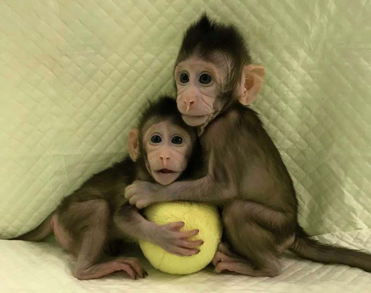 The cloning of monkeys Zhong Zhong and Hua Hua brings scientists closer to replicating humans, but ethics issues persist.