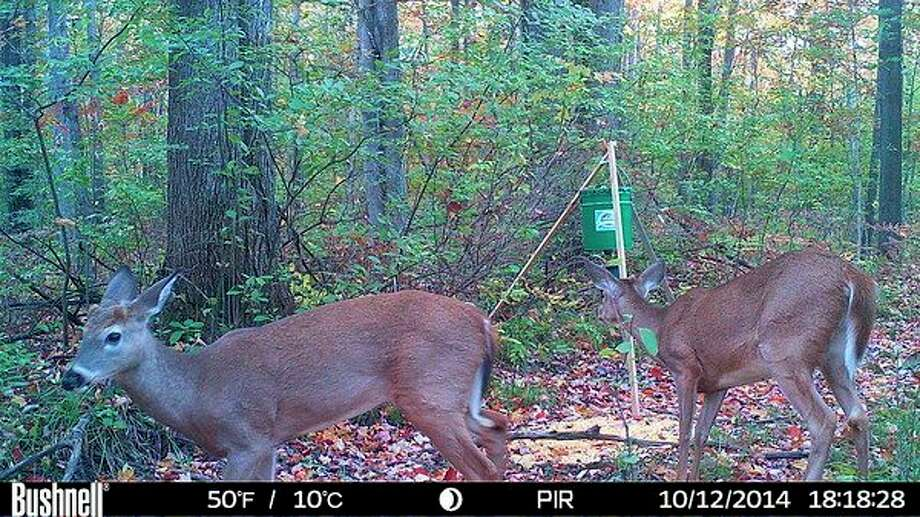 Even small, metered feeders like this one would be illegal if a recommendation from a DNR-named Chronic Wasting Disease Work Group, among five recommendations in a report issued recently, were adopted. A game camera captured this file image; concentrating deer at feeding spots spreads the disease, biologists say. (Steve Griffin file photo/Hearst Michigan)