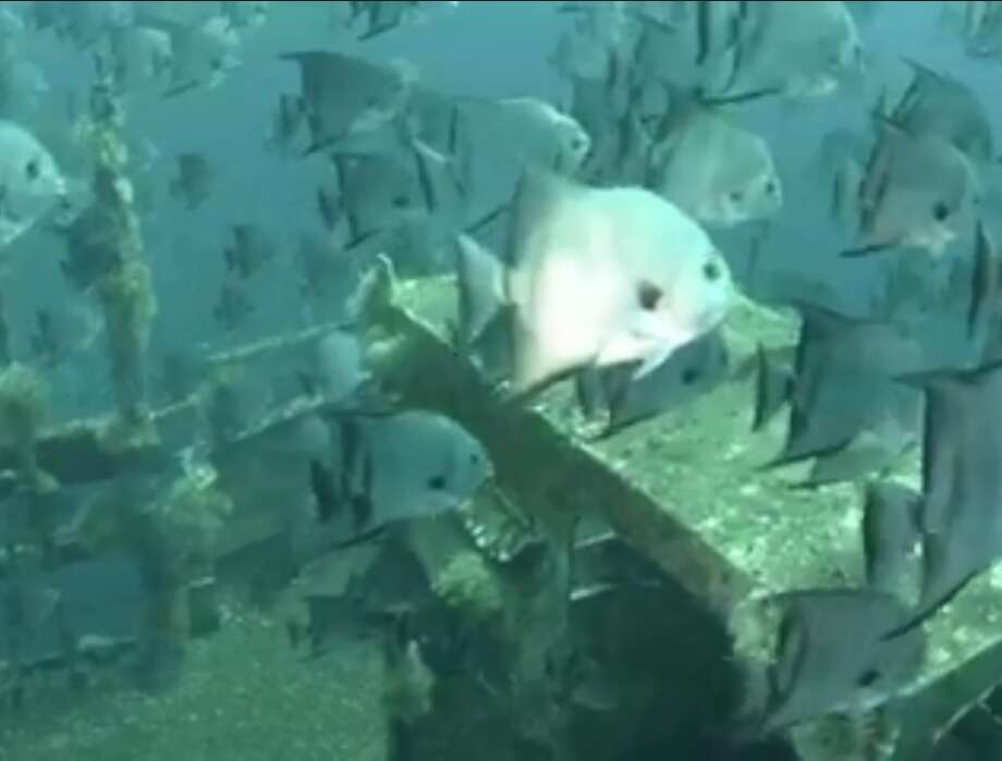 Texas Parks and Wildlife released a video of the Kraken a year after it was sunken in the Gulf of Mexico near Galveston, Texas. Photo: Texas Parks And Wildlife Artificial Reef Program
